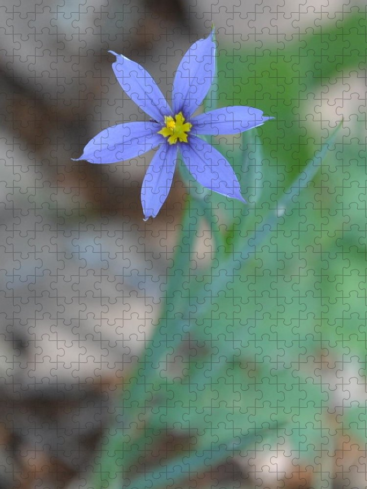 Blue Puzzle featuring the photograph Blue Flower by Frank Madia
