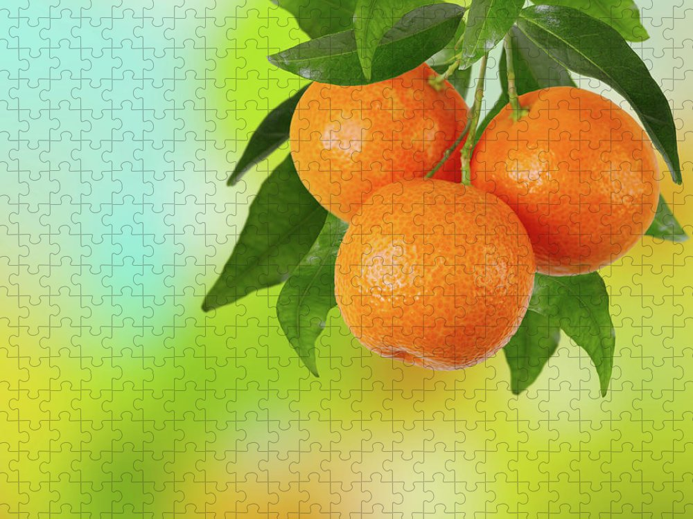 Hanging Puzzle featuring the photograph Branch Of Tangerines by Sashahaltam