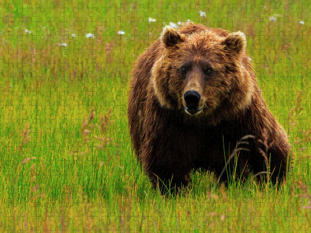 Brown Bear Puzzle featuring the photograph Brown Bear, Lake Clark National Park by Mint Images/ Art Wolfe