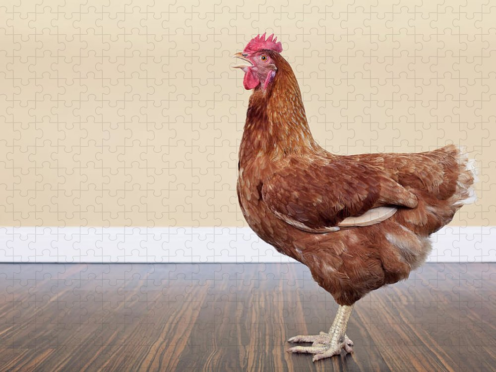 Hen Puzzle featuring the photograph Brown Hen by Little Brown Rabbit Photography