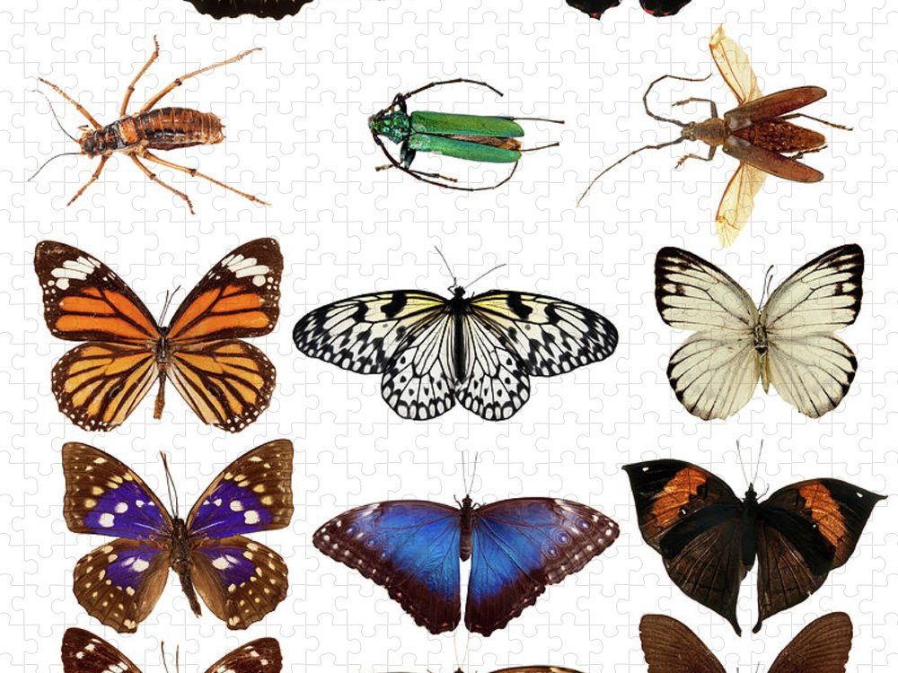 Common Blue Butterfly Puzzle featuring the photograph Butterflies And Beetles by Mashabuba
