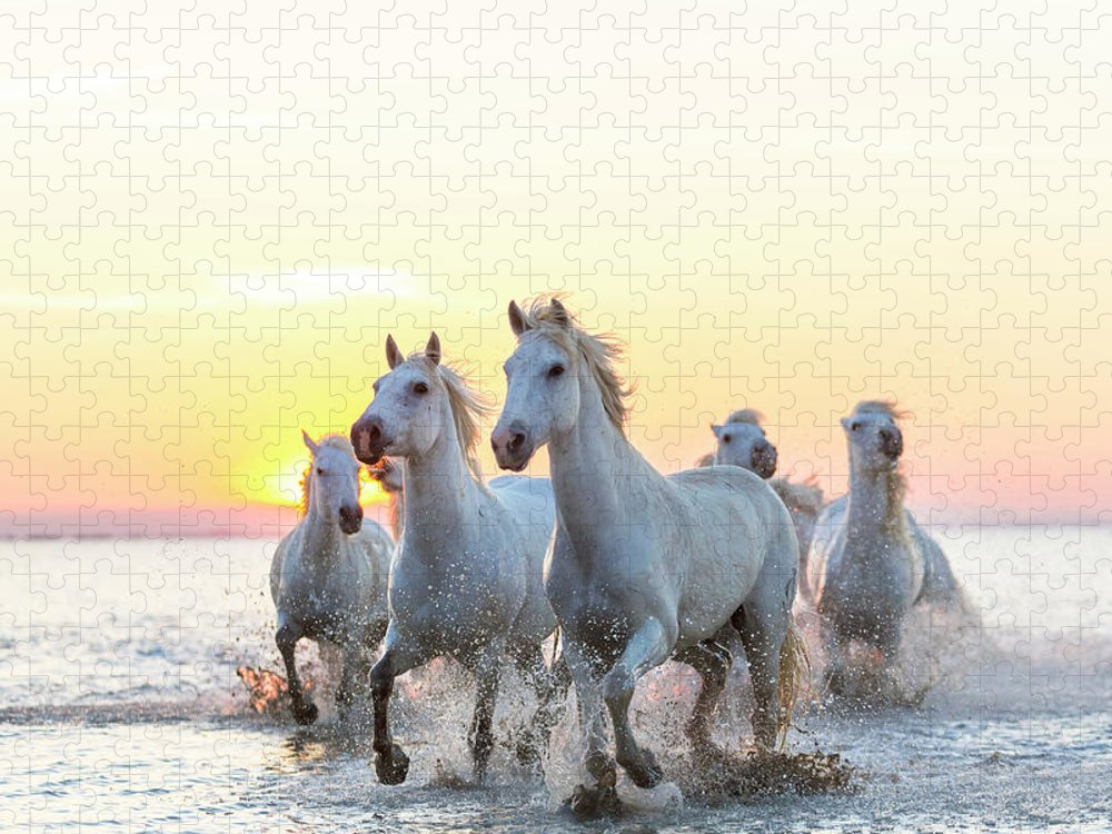 Animal Themes Puzzle featuring the photograph Camargue White Horses Running In Water by Peter Adams