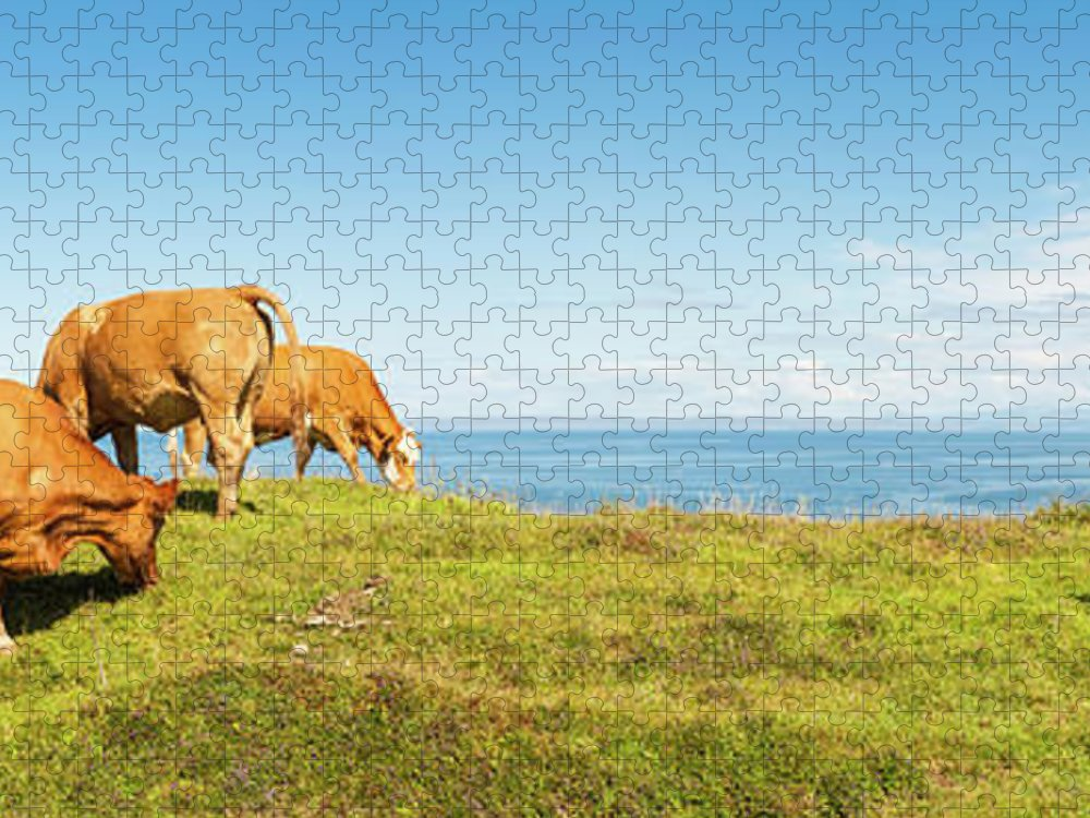 Water's Edge Puzzle featuring the photograph Cattle Grazing In Picturesque Meadow by Fotovoyager