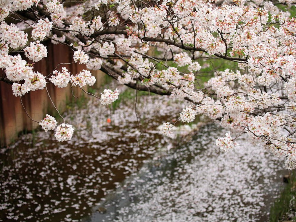 Season Puzzle featuring the photograph Cherry Blossoms by Photography By Zhangxun