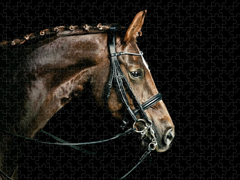 Horse Puzzle featuring the photograph Chestnut Dressage Horse Groomed For A by Anja Hild