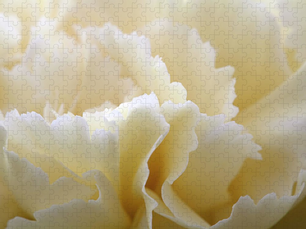 Netherlands Puzzle featuring the photograph Cream Coloured Carnation, Close-up by Roel Meijer