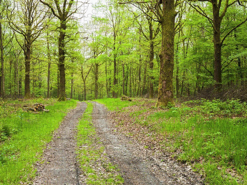 Scenics Puzzle featuring the photograph Dirt Road Surrounded By Trees In by Mike Kemp Images