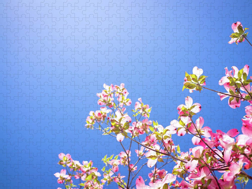 Dogwood Puzzle featuring the photograph Dogwood Flowers by Marser