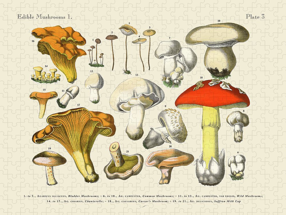 White Background Puzzle featuring the digital art Edible Mushrooms, Victorian Botanical by Bauhaus1000