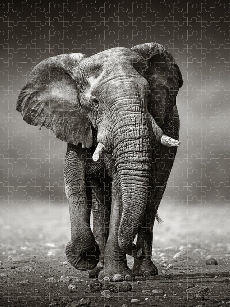 Elephant Puzzle featuring the photograph Elephant approach from the front by Johan Swanepoel