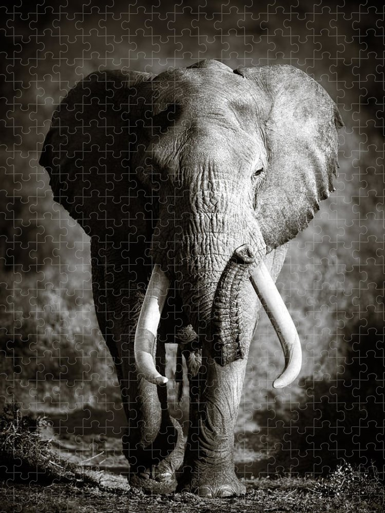 Elephant Puzzle featuring the photograph Elephant Bull by Johan Swanepoel