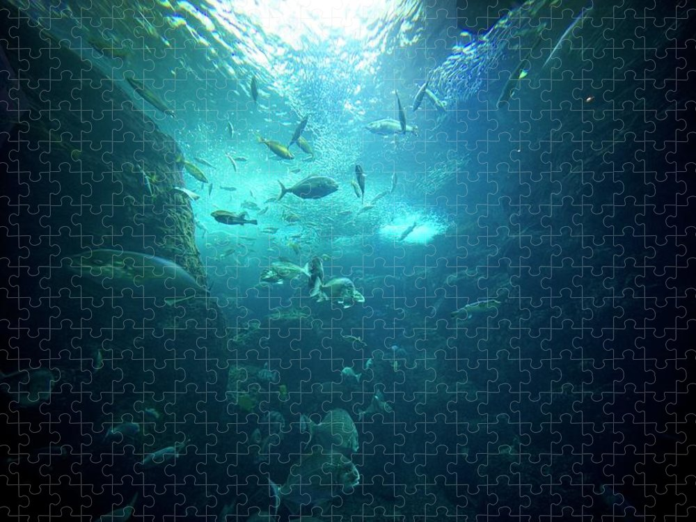 Underwater Puzzle featuring the photograph Fishes by By Tddch