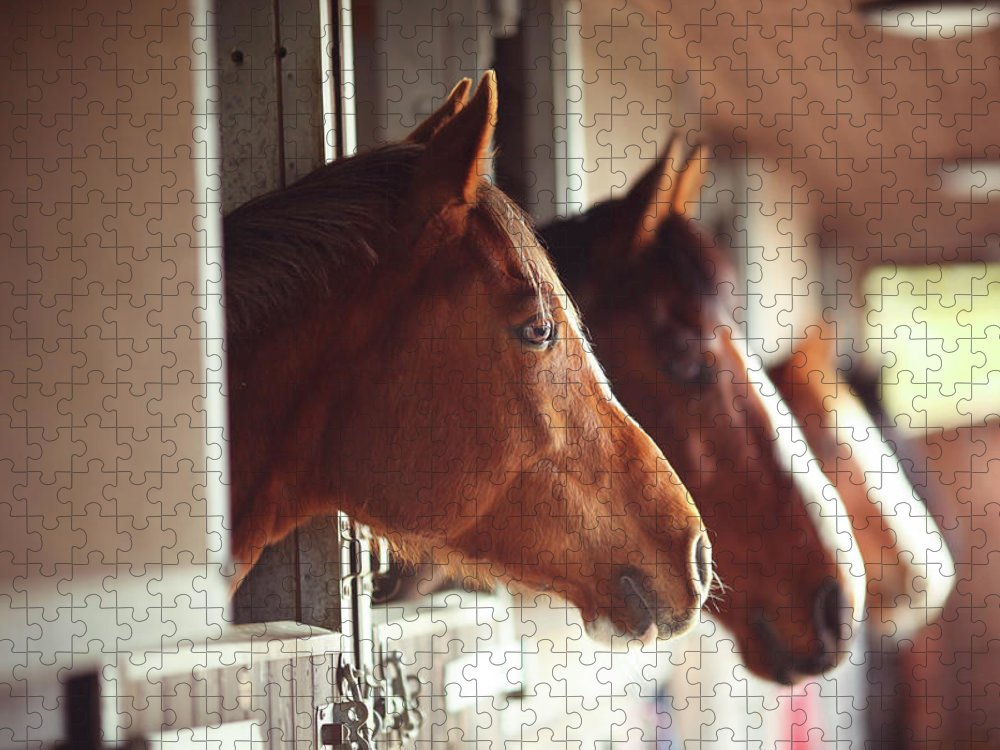 Horse Puzzle featuring the photograph Four Horses In Stables by Olivia Bell Photography