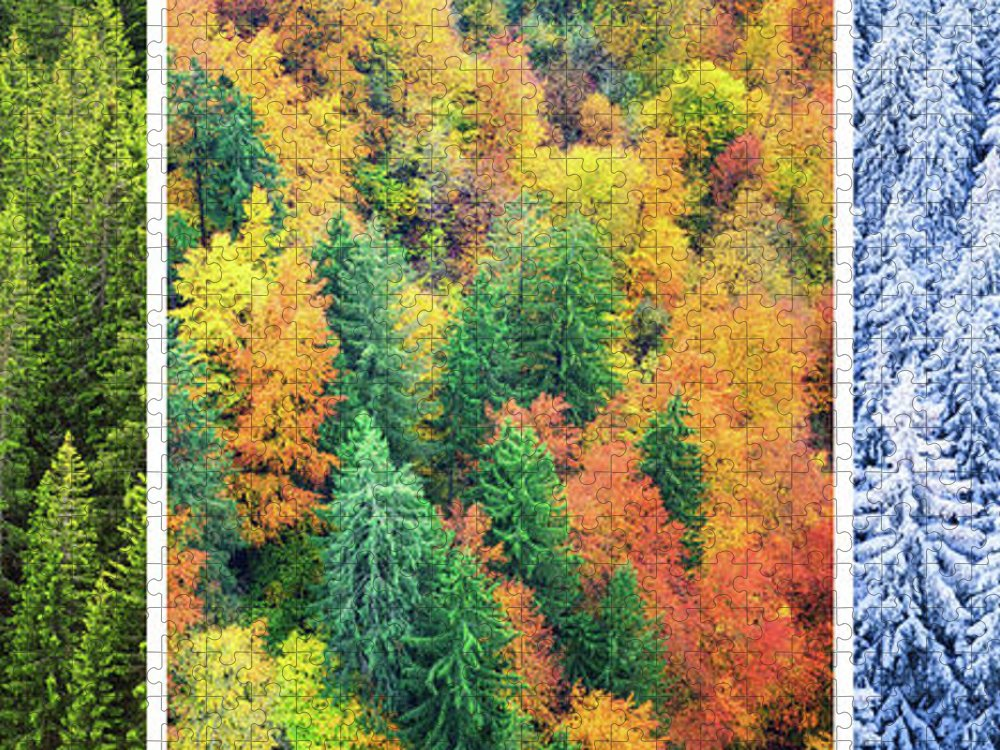 Scenics Puzzle featuring the photograph Four Season Forest by Borchee