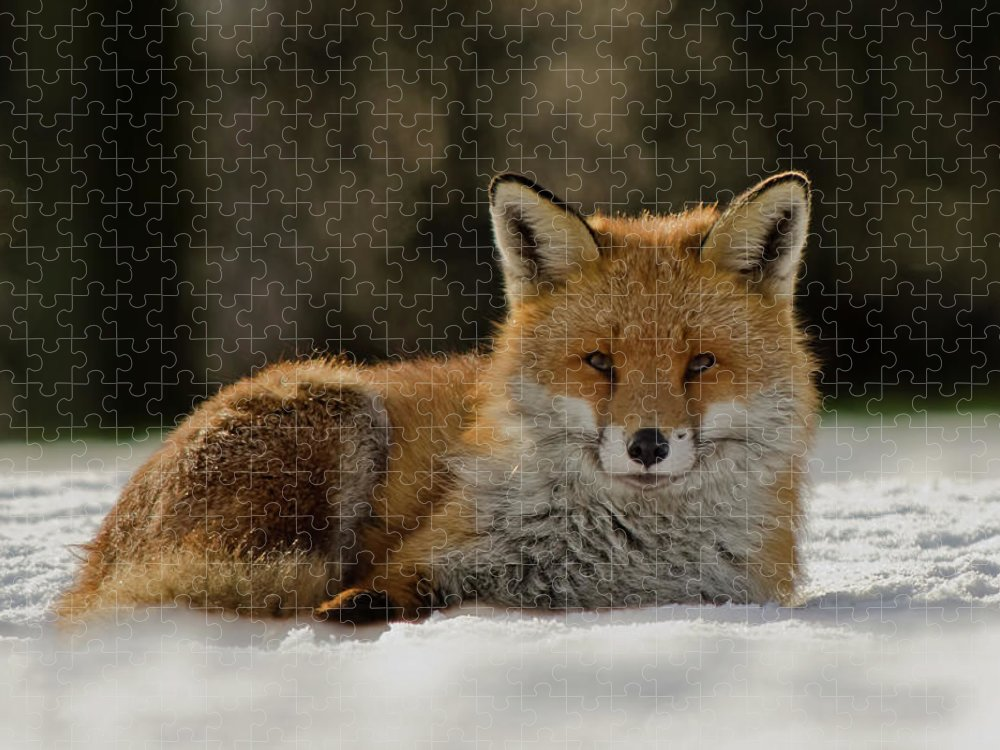 Snow Puzzle featuring the photograph Fox In The Snow by Mark Bowen