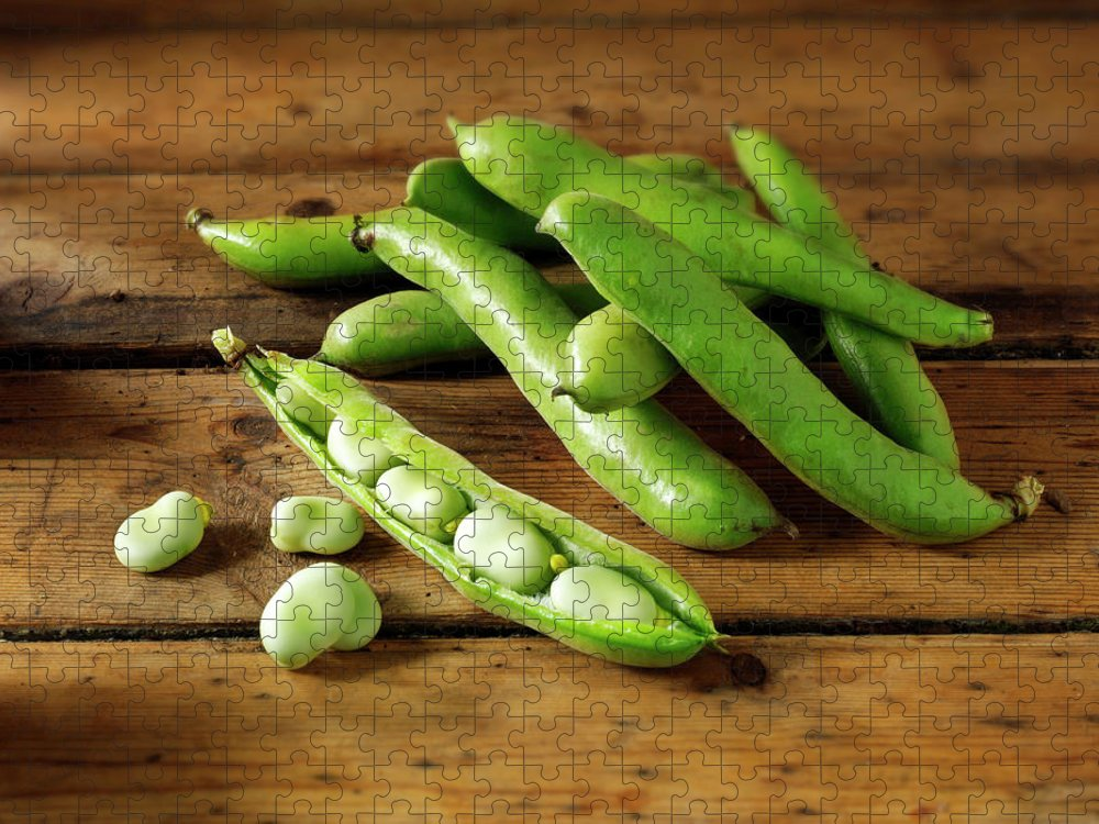 Healthy Eating Puzzle featuring the photograph Fresh Broad Beans In Their Pods by Paul Williams - Funkystock