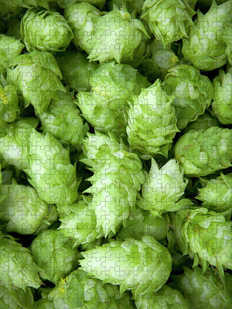 Alcohol Puzzle featuring the photograph Fresh Hops by Licreate