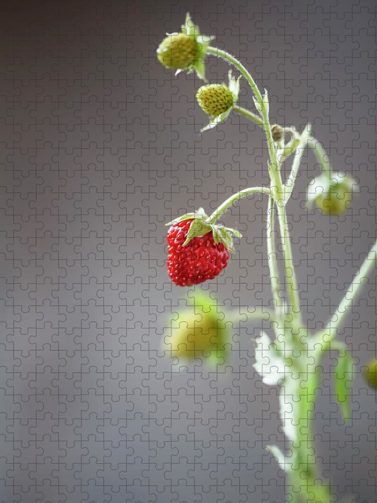 Wild Strawberry Puzzle featuring the photograph Germany, Baden Wuerttemberg, Wild by Westend61
