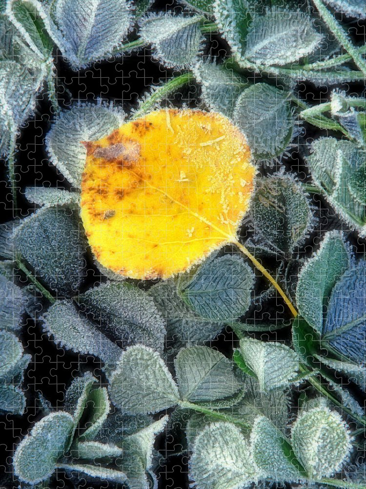 First Frost Puzzle featuring the photograph Gold On Green by Bill Morgenstern