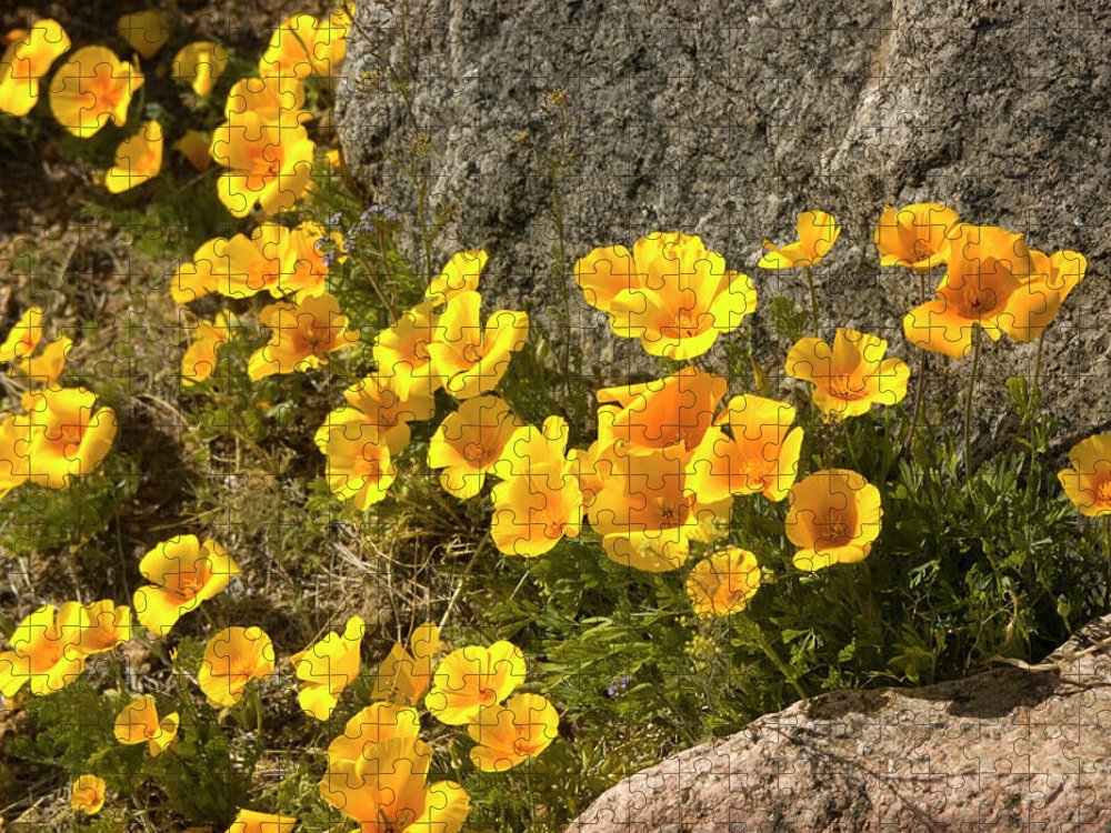 Chihuahua Desert Puzzle featuring the photograph Golden Poppies Among Rocks by Elflacodelnorte