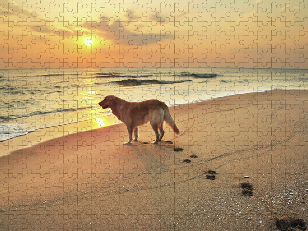 Pets Puzzle featuring the photograph Golden Retriever Dog On Seashore At by Maya Karkalicheva