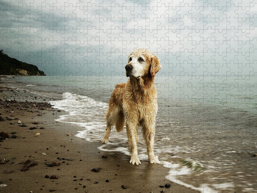 Pets Puzzle featuring the photograph Golden Retriever On Beach by Jutta Bauer