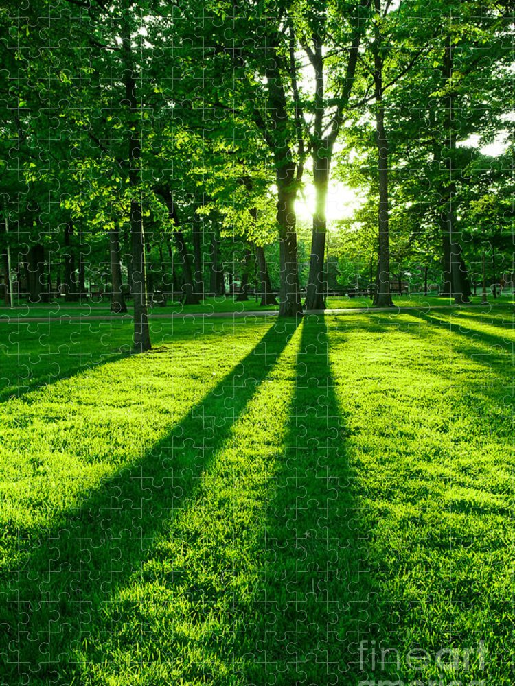 Park Puzzle featuring the photograph Green park with setting sun by Elena Elisseeva