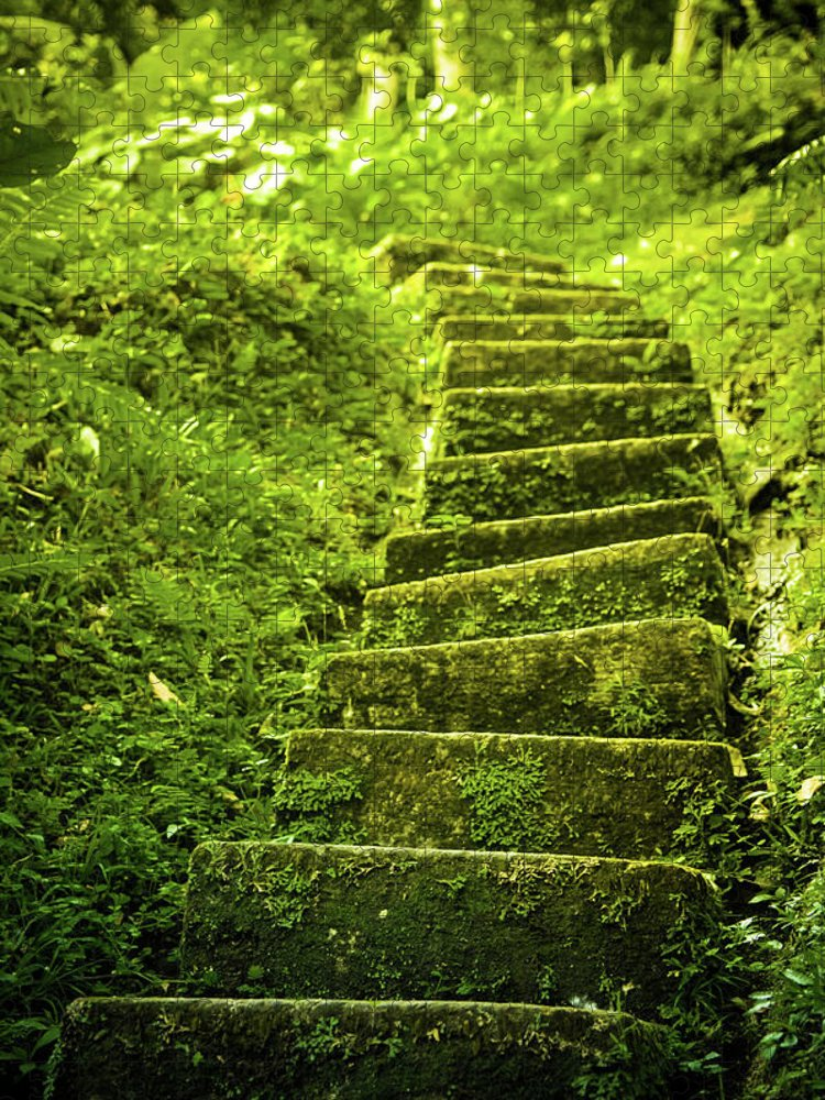 Tropical Rainforest Puzzle featuring the photograph Green Stair by Pixalot
