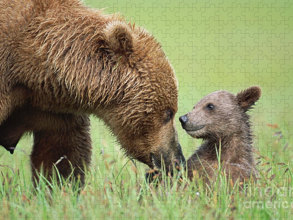 00345260 Puzzle featuring the photograph Grizzly Bear And Cub in Katmai by Yva Momatiuk John Eastcott
