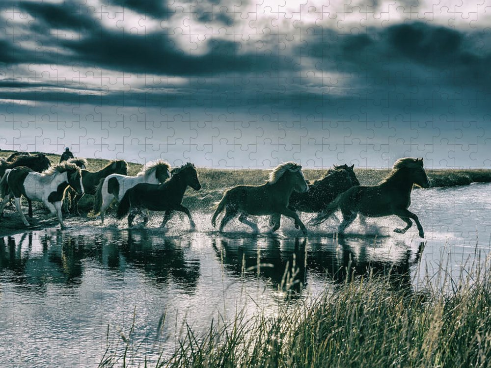 Horse Puzzle featuring the photograph Group Of Horses Crossing A River by Arctic-images