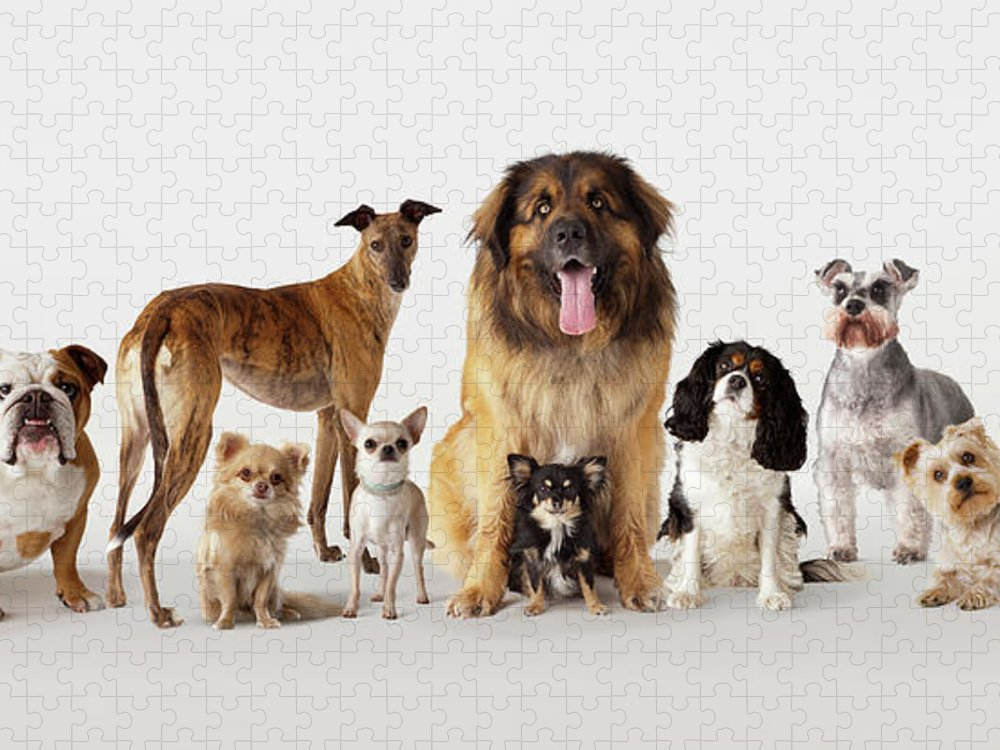 Pets Puzzle featuring the photograph Group Portrait Of Dogs by Compassionate Eye Foundation/david Leahy