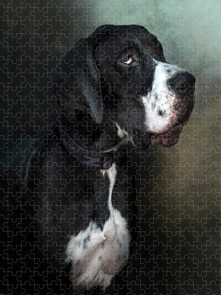 Pets Puzzle featuring the photograph Helga by Silversaltphoto.j.senosiain