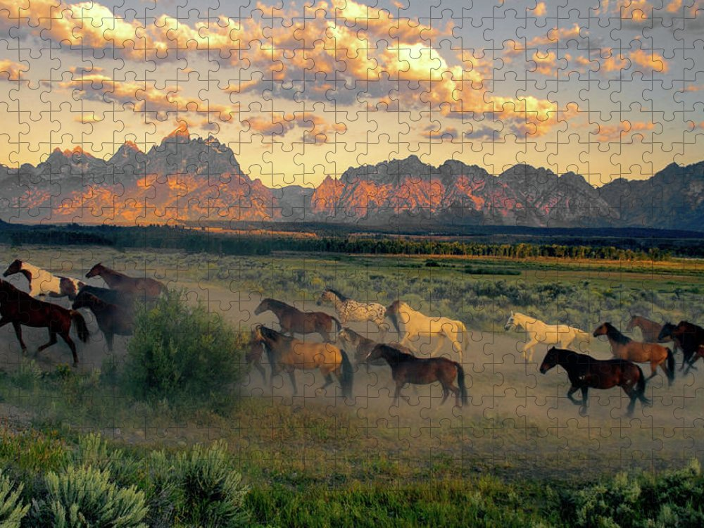 Horse Puzzle featuring the photograph Horse Drive At Teton Sunrise by Patricia Bauchman Photography