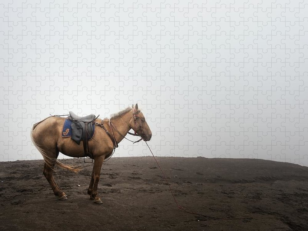 Horse Puzzle featuring the photograph Horse On A Mountain On A Foggy Day by Carlina Teteris