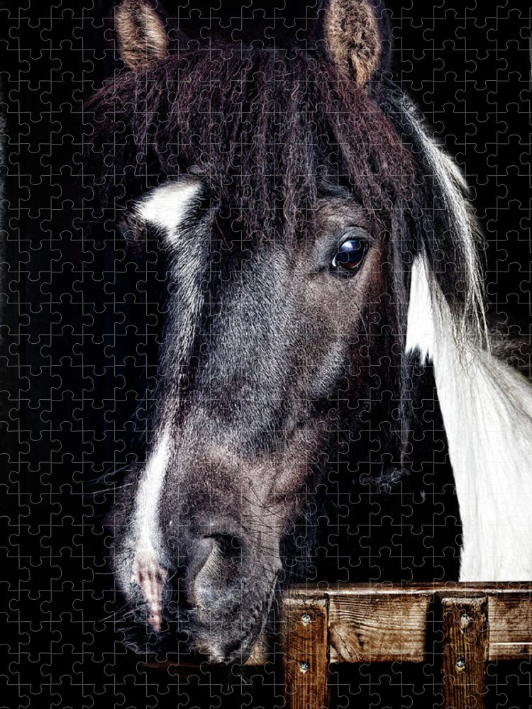 Horse Puzzle featuring the photograph Horse Portrait by Peter Glogiewicz