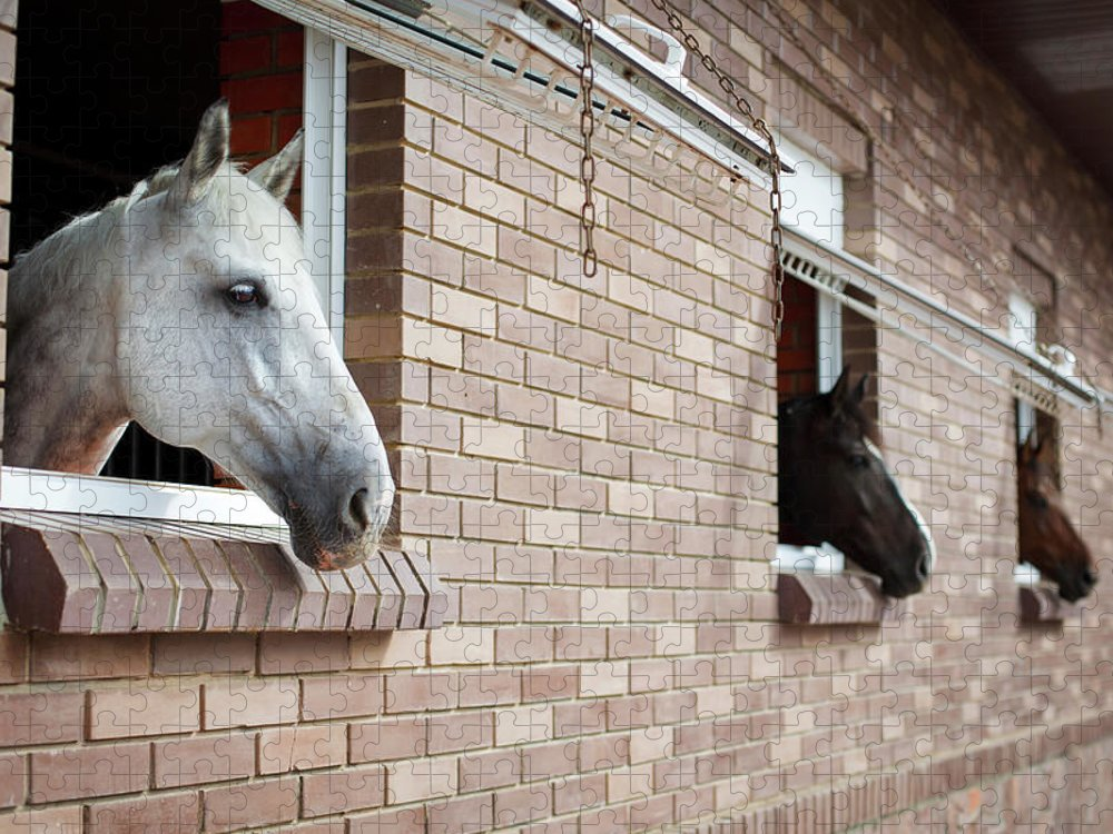 Horse Puzzle featuring the photograph Horses Looking From The Windows Of A by O sa