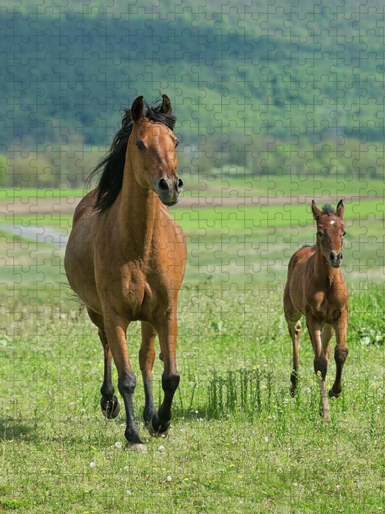 Horse Puzzle featuring the photograph Horses Running In Summer Pasture, Mare by Catnap72