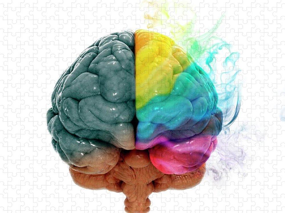 White Background Puzzle featuring the digital art Human Brain, Artwork by Andrzej Wojcicki