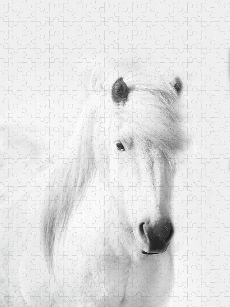 White Background Puzzle featuring the photograph Icelandic Pony In White by Grant Faint
