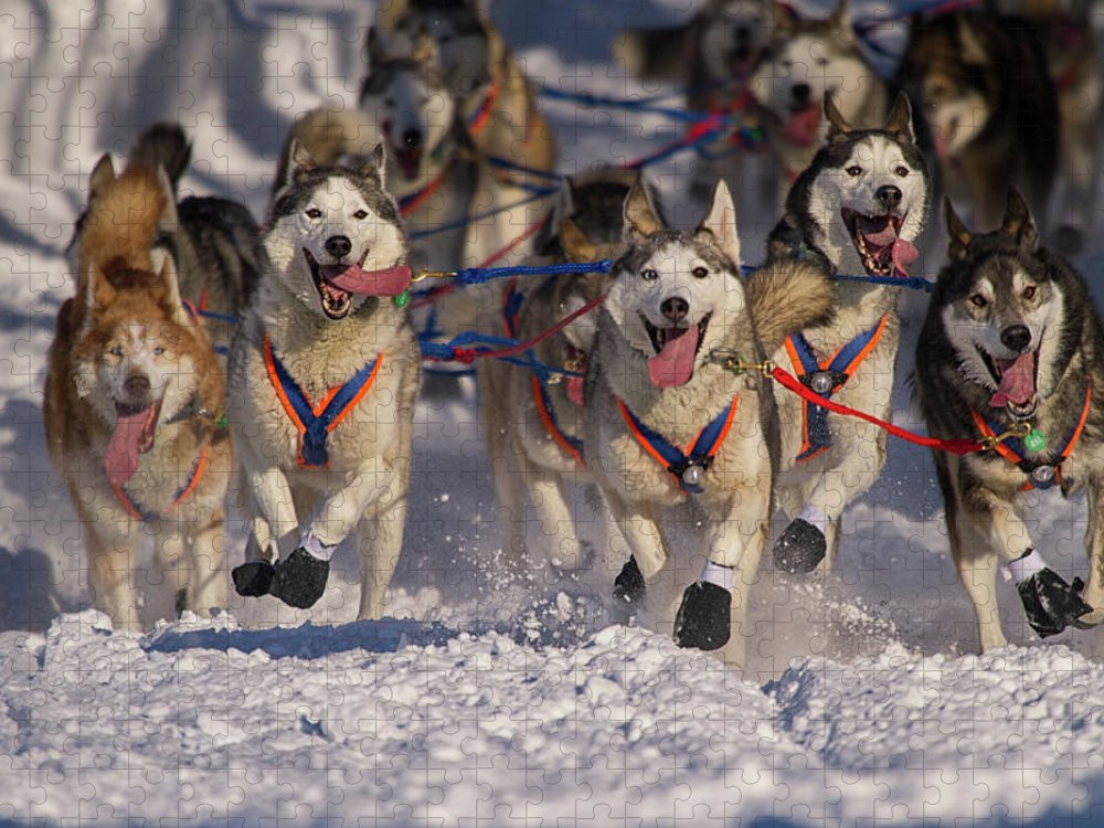 Snow Puzzle featuring the photograph Iditarod Huskies by Alaska Photography