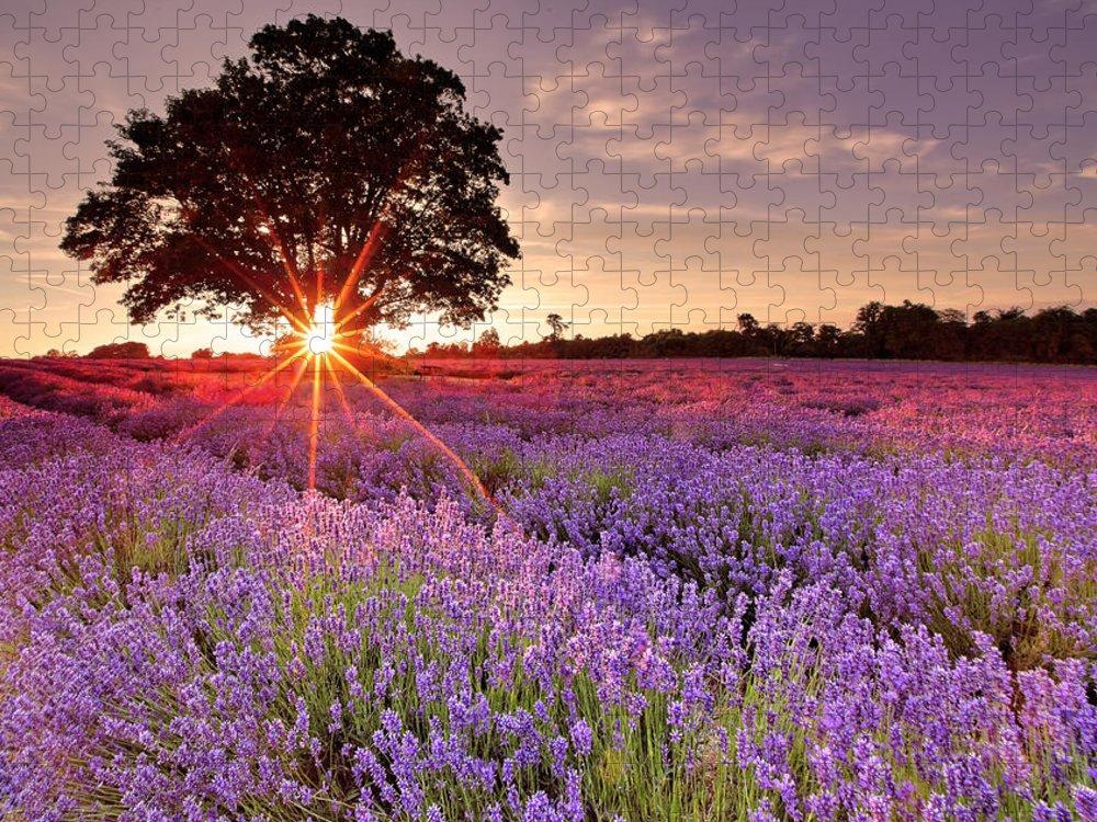 Scenics Puzzle featuring the photograph Lavender Field by Sandra Kreuzinger