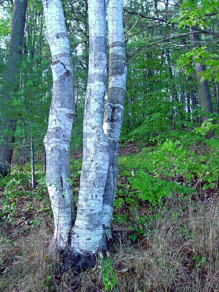 Birch Tree Puzzle featuring the photograph Lone Birch in the Maine Woods by Suzanne Gaff