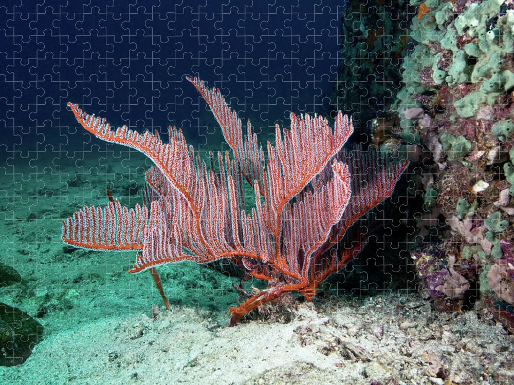 Underwater Puzzle featuring the photograph Lyre Gorgonian, Harp Coral by Gerard Soury