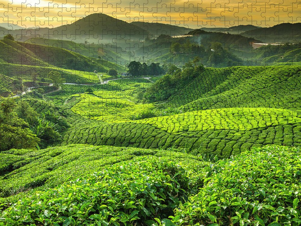 Cameron Highlands Puzzle featuring the photograph Malaysia, Pahang, Cameron Highlands by Cescassawin