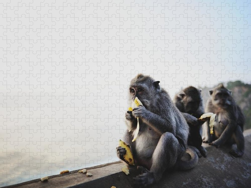 In A Row Puzzle featuring the photograph Monkeys Eating Bananas by Carlina Teteris
