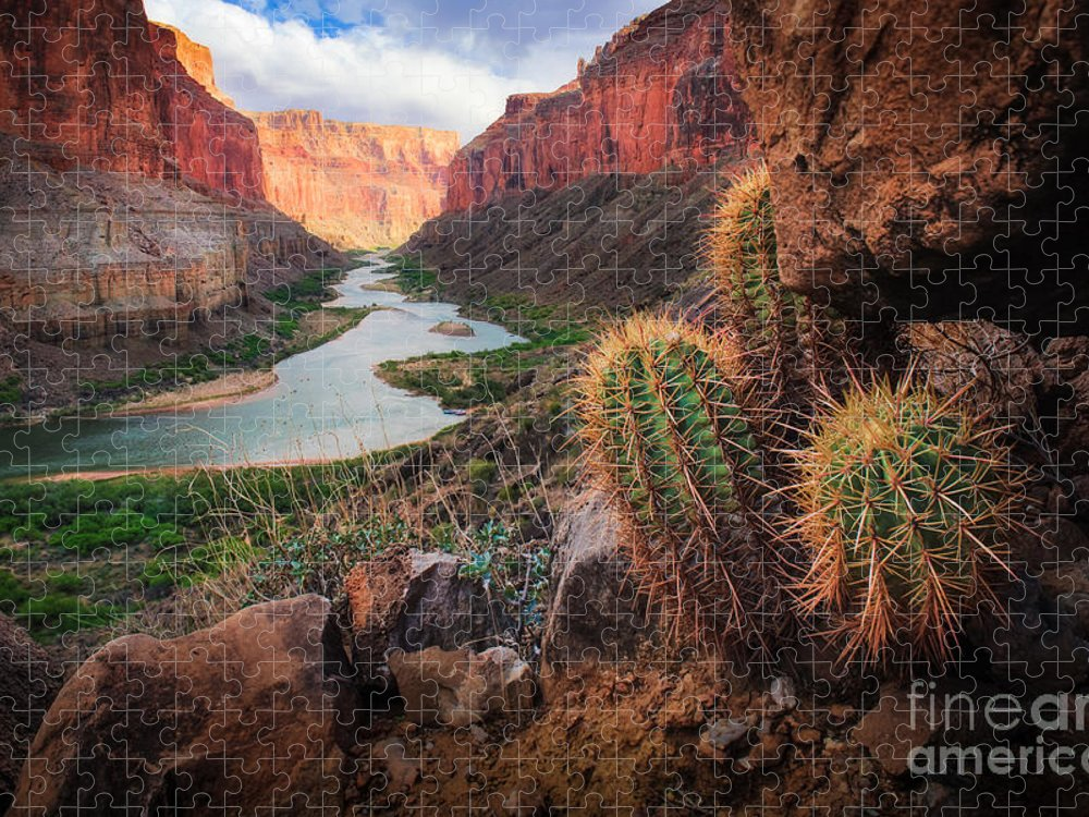 America Puzzle featuring the photograph Nankoweap Cactus by Inge Johnsson