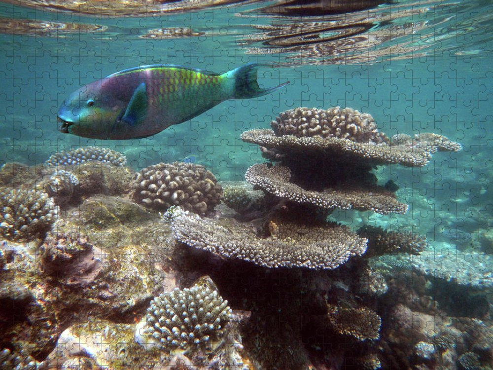 Underwater Puzzle featuring the photograph Parrotfish On The Barrier Reef At by Federica Grassi