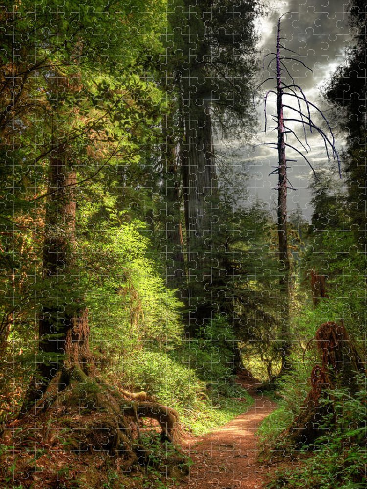 Tranquility Puzzle featuring the photograph Path Through Redwood Forest by Ed Freeman