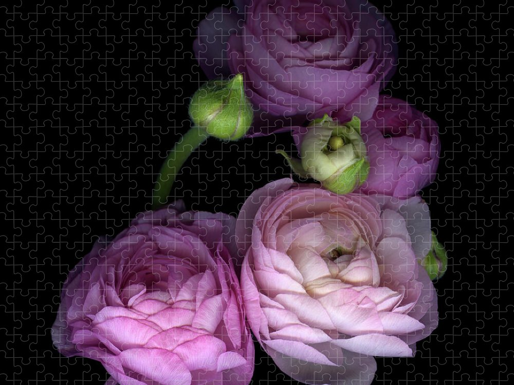 Bud Puzzle featuring the photograph Pinkalicius Ranunculus... Pink For by Photograph By Magda Indigo
