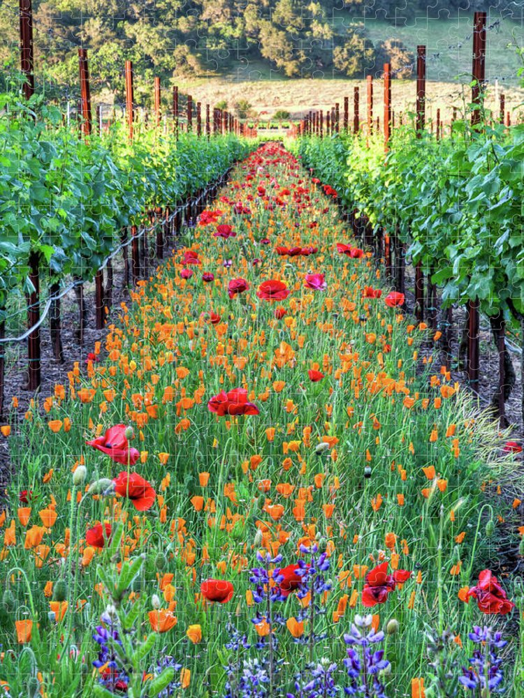 Tranquility Puzzle featuring the photograph Poppy Lined Vineyard by Rmb Images / Photography By Robert Bowman